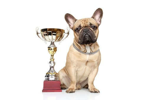 Dog with Trophy