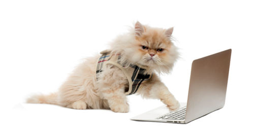 cat-website-developer